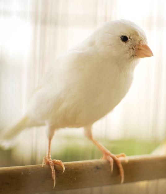 bird-2871833_1920